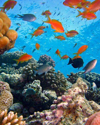 Fragrance Récif corallien