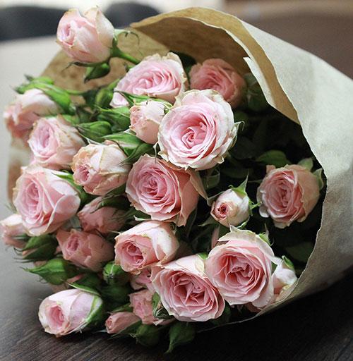 Frarance Roses fraîchement coupées