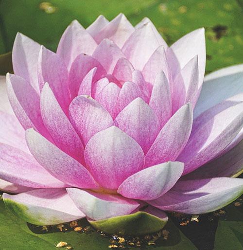Fragrance cosmétique Bouquet frais