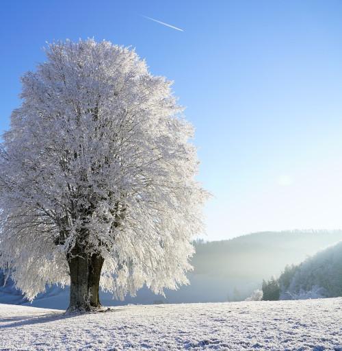 Journee d'hiver - Fragrance cosmétique et parfum pour bougies