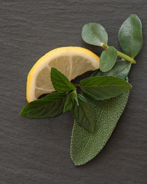 Fragrance cosmétique Menthe eucalyptus