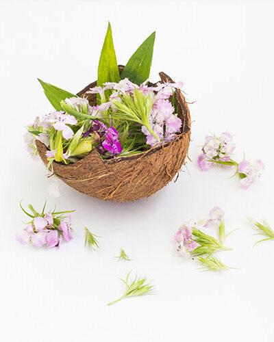 Fleur de coco - Parfum bougie et fragrance cosmétique