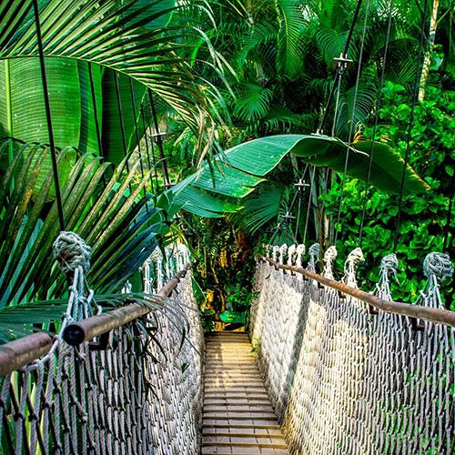 Forêt tropicale - Parfum bougie et fragrance cosmétique